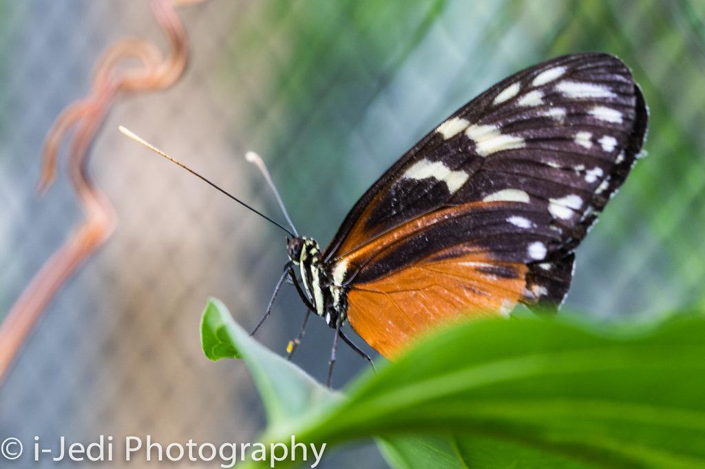 Tropische-Schmetterlinge-Augsburg-05610.jpg