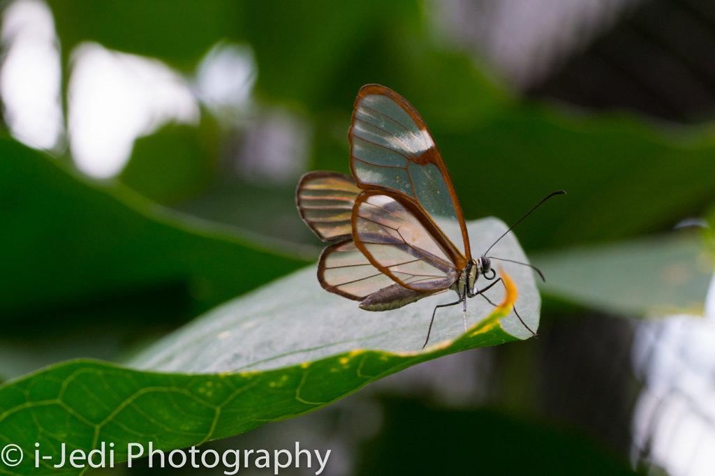Tropische-Schmetterlinge-Augsburg-05632.jpg
