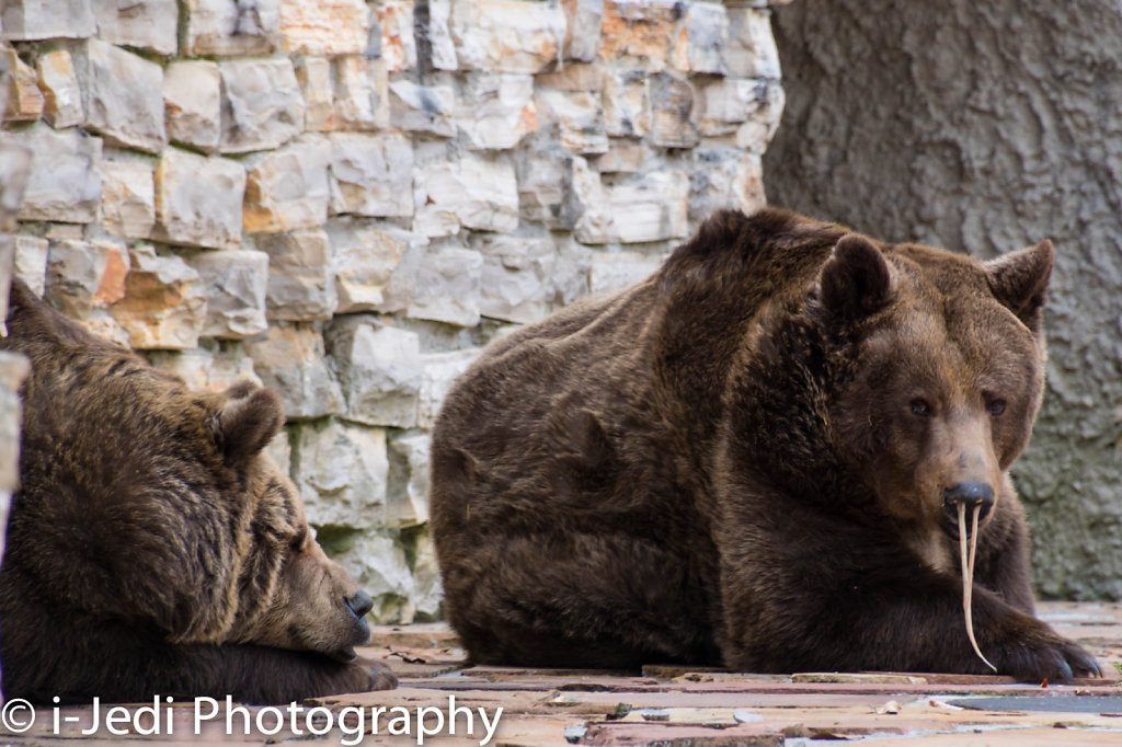 Zoo-Augsburg-11.jpg