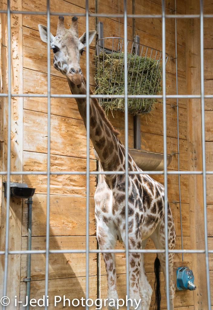 Zoo-Augsburg-15.jpg